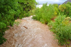 Flooded Virgin River in Zion National Park